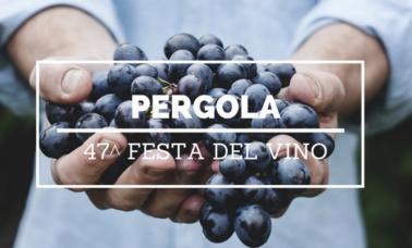 pergola 47 festa del Vino
