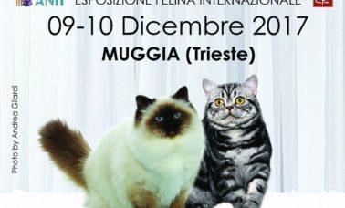 A Trieste l'esposizione felina porta i gatti più belli del mondo
