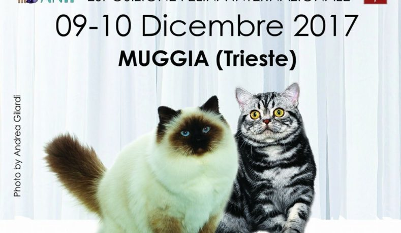A Trieste Lesposizione Felina Porta I Gatti Più Belli Del Mondo